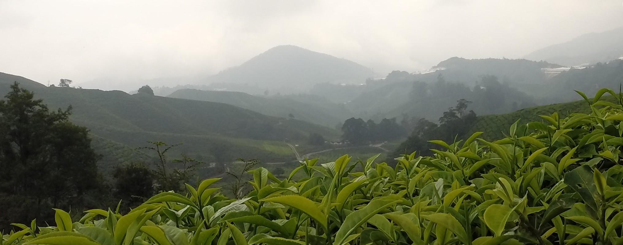 Plantations Operations (Tea, Coffee, Rubber ...)